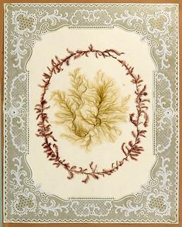 006-Album de algas marinas-1848- Brooklyn Museum Library | by ayacata7