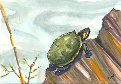 20190407_turtle