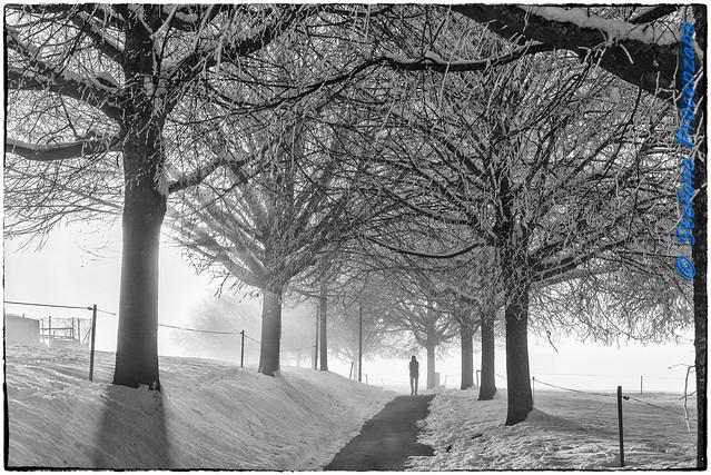 Chemin des Tilleuls (noir et blanc)