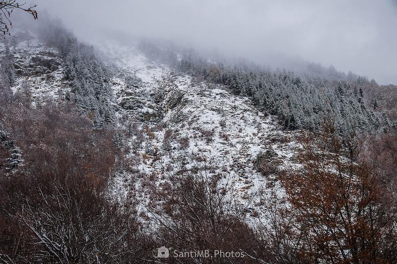 Bosque afectado por una avalancha pocos años atrás.