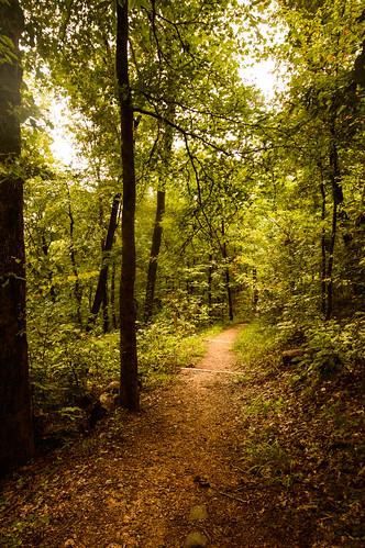 Jeff Busby woodland walk