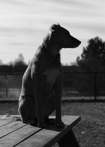 Dog park | by Chris McPhee