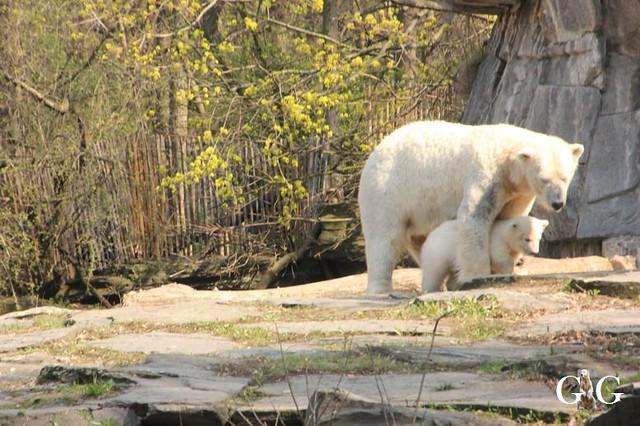 Besuch Tierpark Friedrichsfelde 06.04.2019105