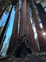 Taman Nasional Sequoia