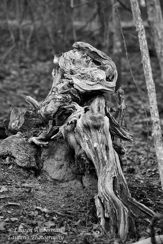 laurensphotography lauren3838photography landscape wood tree forest georgia park stonemountain texture monochrome nature ilovenature nikon d750 tourism