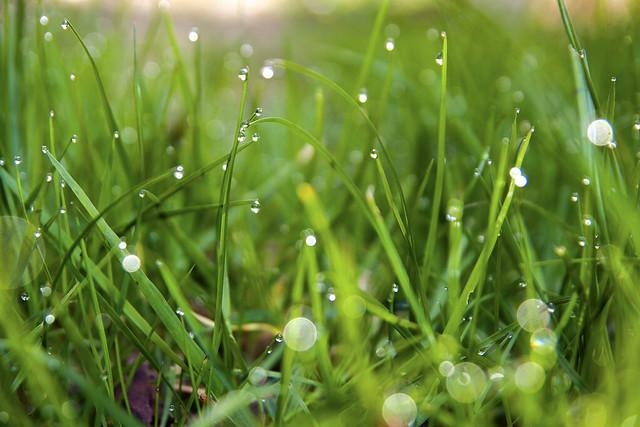 Lawn sparkle