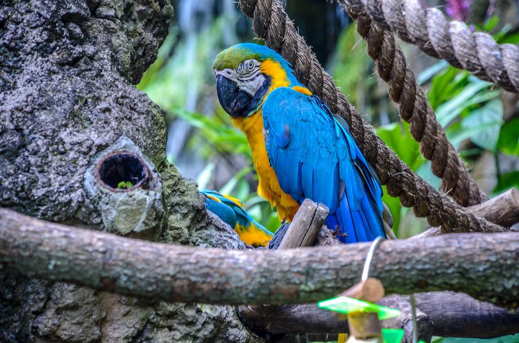 Parrot AK