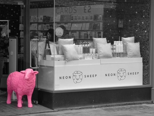 ColourSplash Neon Sheep Shop Front Cambridge Mar 2019