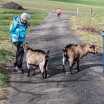 Seniorenwanderung Buuseregg - Magden 07.03.2019