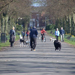 Dog walkers at Haslam Park, Preston