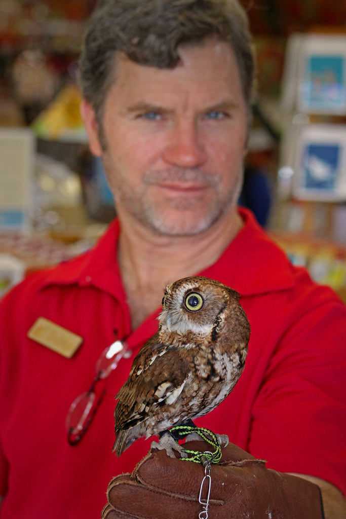 2019.03.09 Sunrise Wildlife at WBU Eastern Screech Owl Ruby 4
