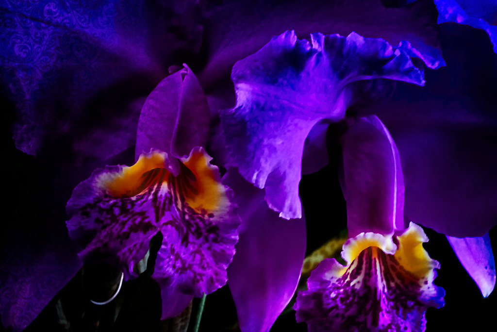 Abstract macro moth orchid