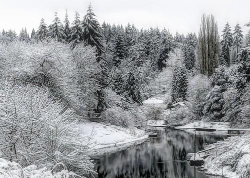 snow winter trees cold washington