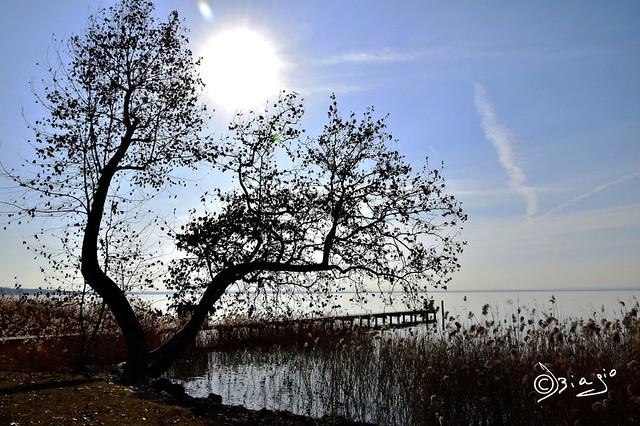 Un albero...in ognuno di Noi