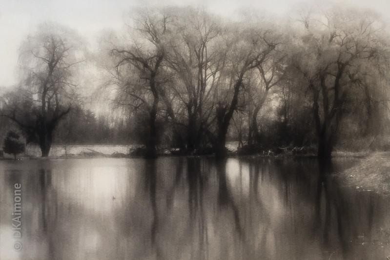 Waning Willows