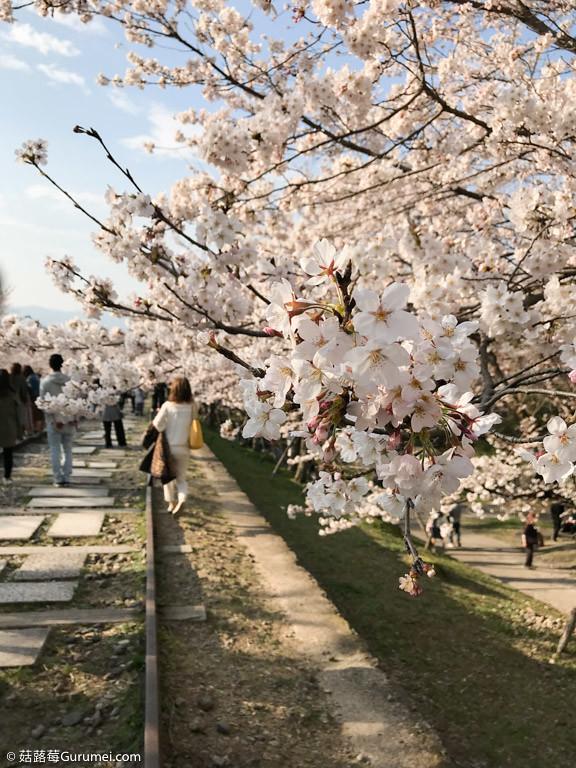 打工度假-京都生活-賞花、野餐-061