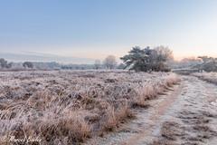 terhorst landschap winter