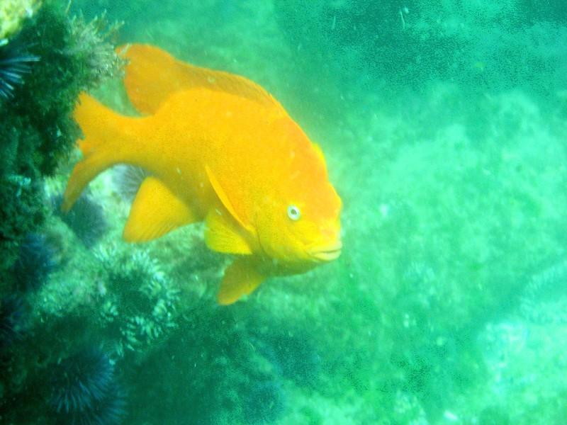 Aug 6th, 2007 Laguna Beach Diving Calif. 025