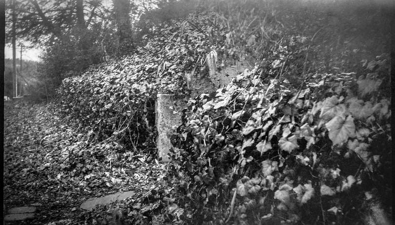 ivy-covered front yard, Asheville, NC, Eastman Kodak No. 2 Bulls Eye Model D, Arista.Edu 200, Ilford Ilfosol 3 developer, 2.13.19