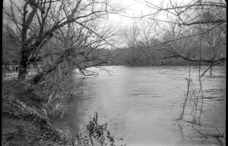 overhanging branches, bank, French Broad River, Asheville, NC, Kodak Brownie No. 2 Model F, Kodak Tri X 400, Ilford Ilfosol 3 developer, 2.21.19