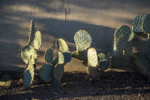 Cactus shadows | by jimbellomo