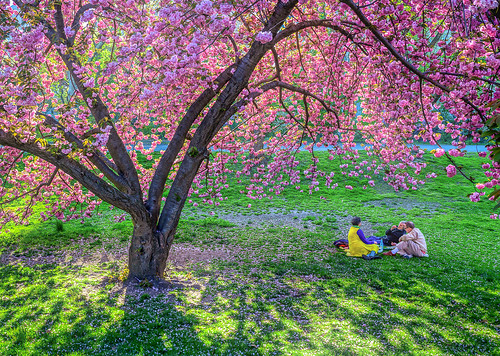 Picnic Under The Cherry Tree by Stephen Sherrill | by cameraclub231