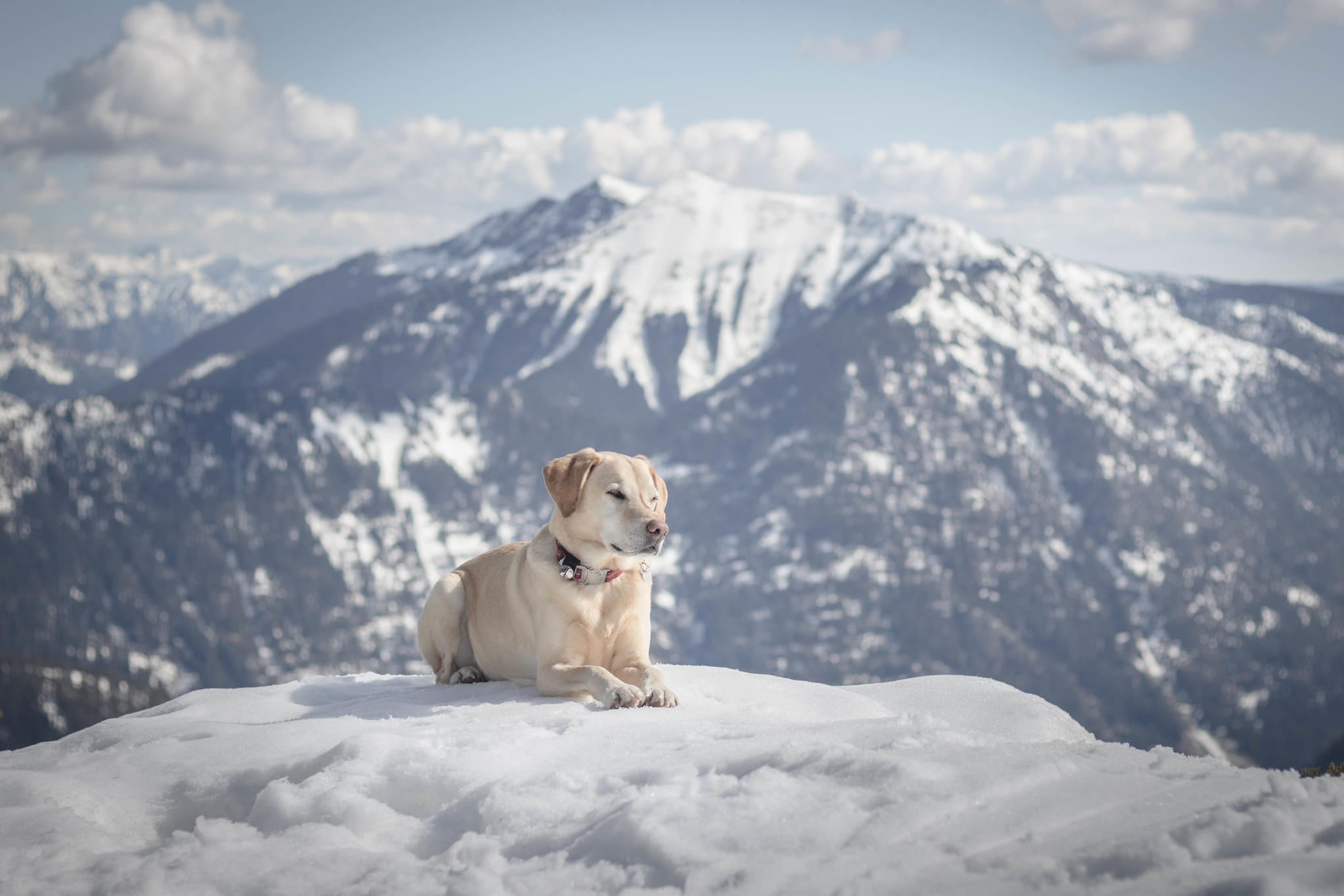 Summit dogs on Big Chief Mountain