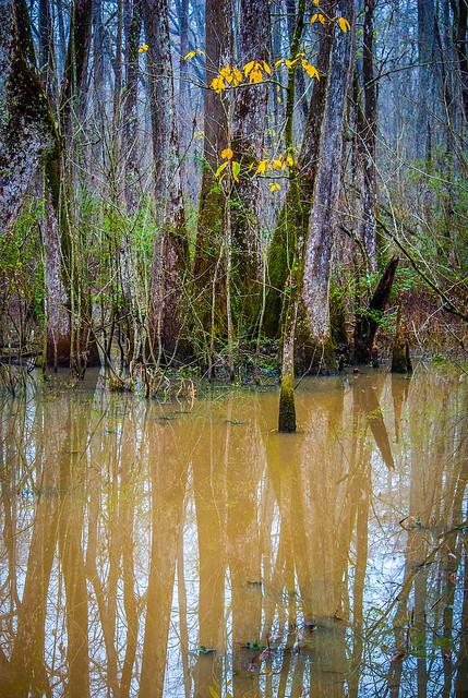 Muddy Swamp Water