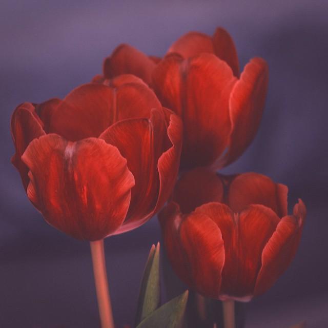 fleurs de février / February flowers