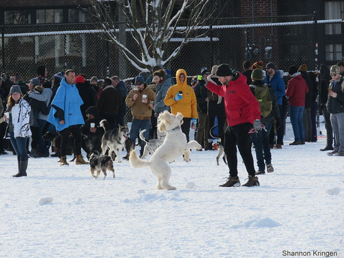 happy dogs cal anderson park seattle snowmageddon