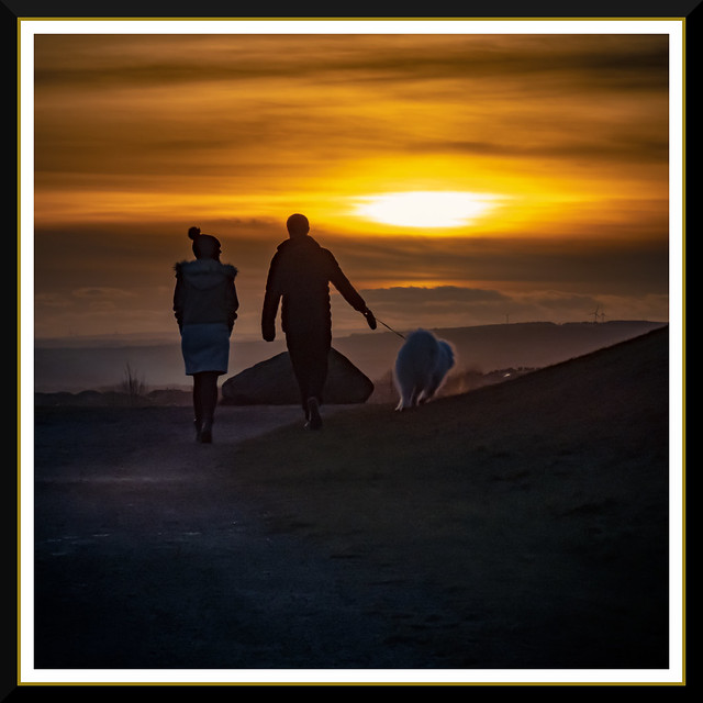 Sunset Wolf Walking