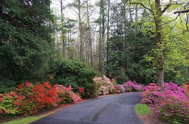 winding road, colourful flowers and green trees