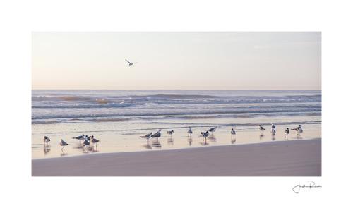 a7rii alpha atlantic beach florida fullframe jacksonville jacksonvillepier ocean pastel raw seaguls sony sunrise jacksonvillebeach unitedstatesofamerica us
