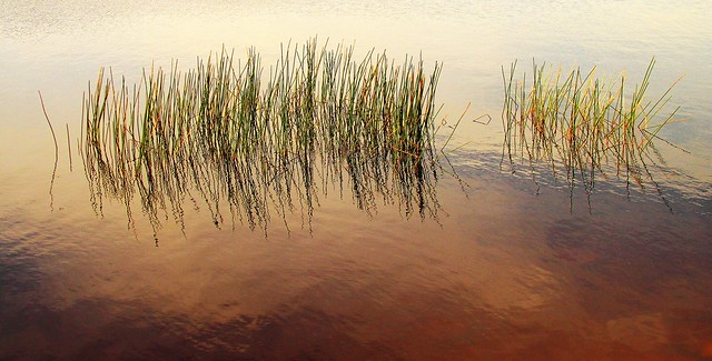 Reeds and Reflections, Moora Moora Reservoir, Grampians, Australia