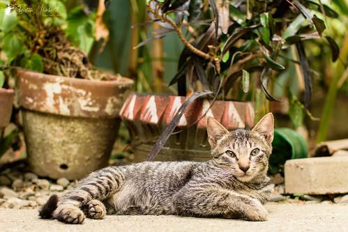 adobe alcala cc creativecloud d7200 lightroom nikon photoshop sigma30mmf14exdchsm vacation cat kitten streetphotography