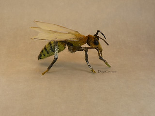 Nuthead Killer Bee Wasp