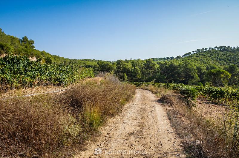 Entre viñedos de la Roqueta