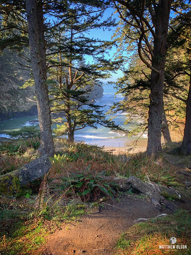 woods coast scenic ocean morning trees beach outdoor washingtonstate iphonexsmax iphone