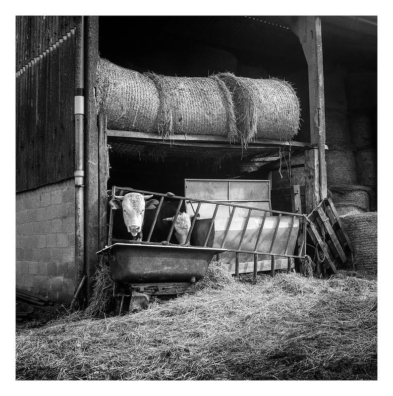 FILM - Farmyard