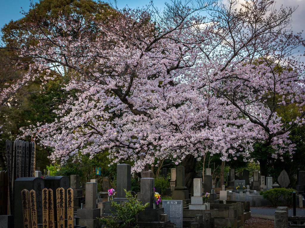 Beauty amongst the graves