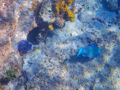 DCL March 2019 Tortola Underwater-40-2.jpg