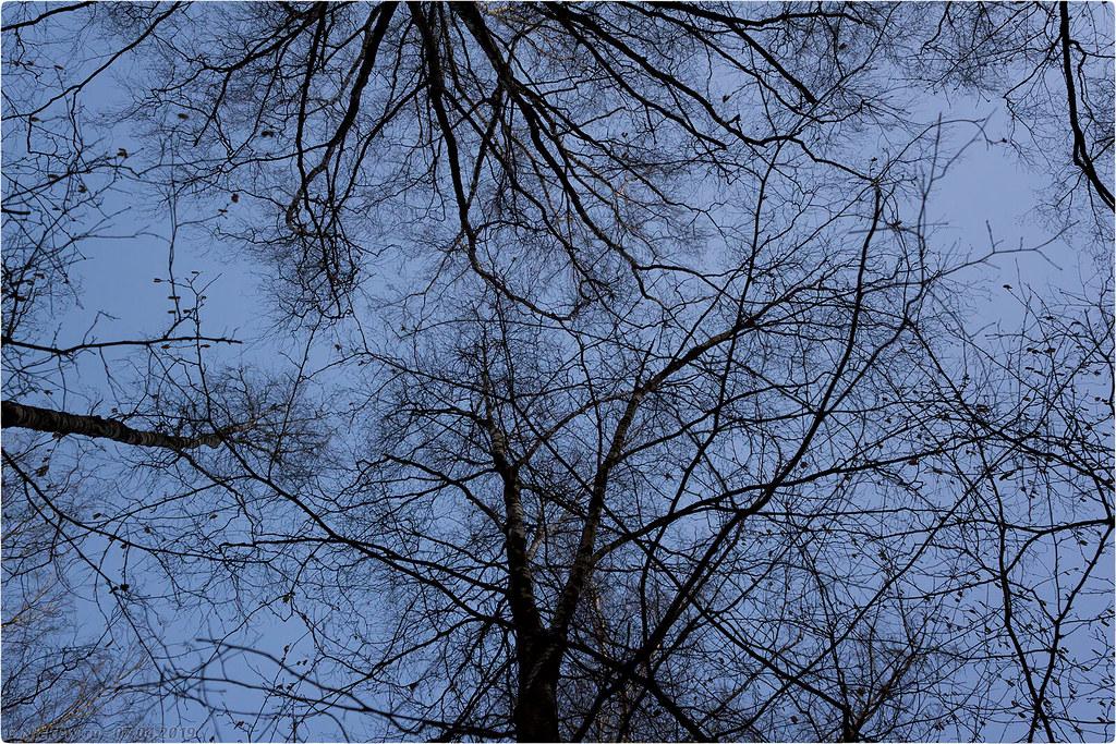 Ульяновский лесопарк [© NickFW.ru - 07.04.2019г.]