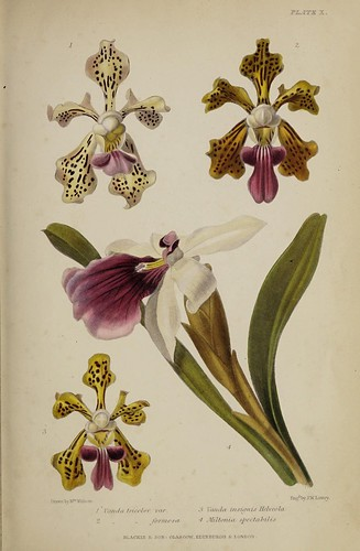 n834_w1150 | by BioDivLibrary
