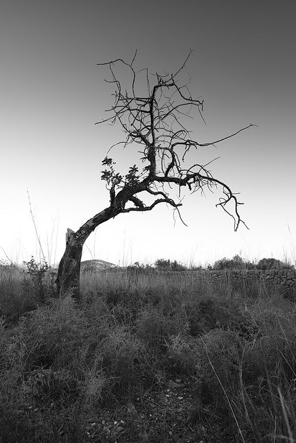 Tema:Arbol seco solitario