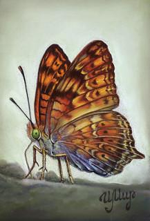Butterfly | by irishishka