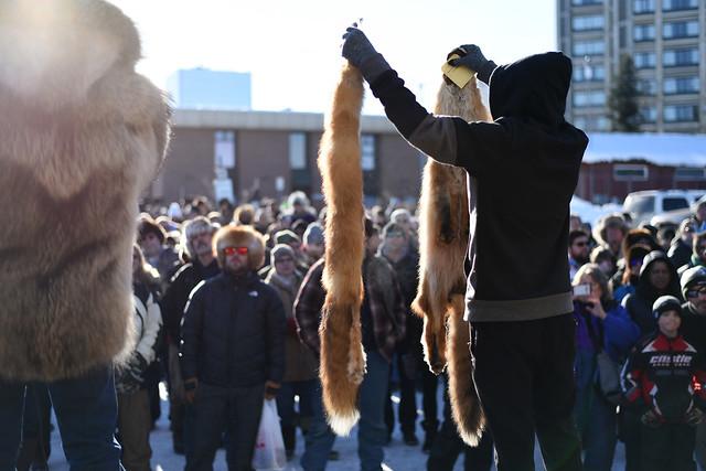 Alaska Trappers Association Fur Auction. Fur Rondy 2019