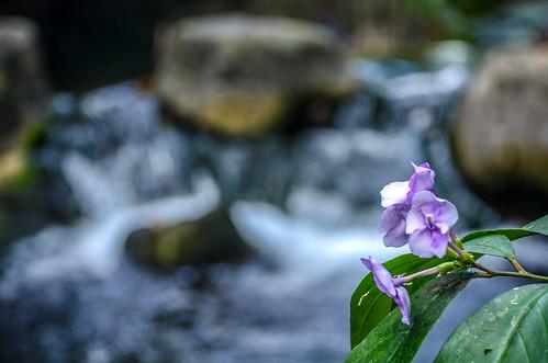 Flower water AK | by gamecrew7