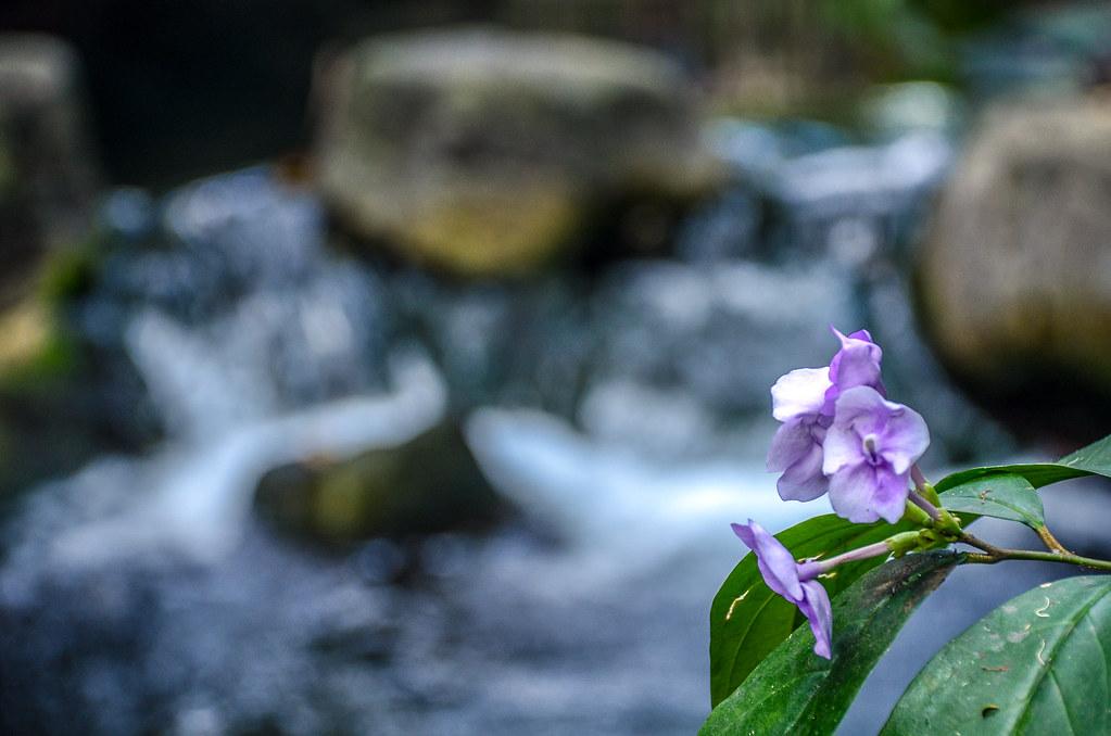 Flower water AK