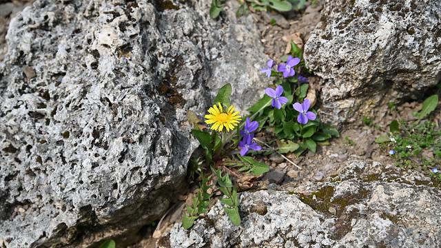 Frühling in Belvedere
