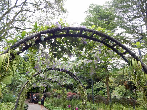 City Girl City Stories: National Orchid Garden | by citygirlcitystories